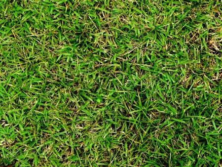 Grass Green Background photo