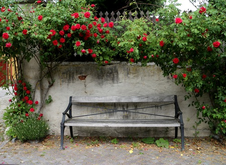 An empty park bench surrounded by red roses