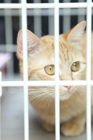 Orange Cat in The Cage Stock Photo - 18988922