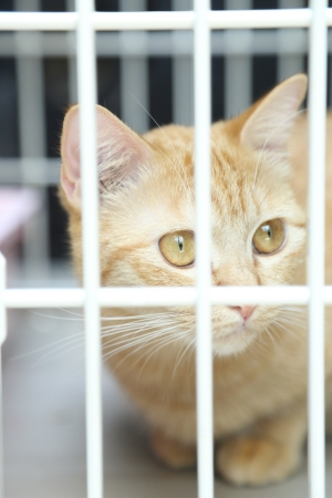 Orange Cat in The Cage Stock Photo - 18988922