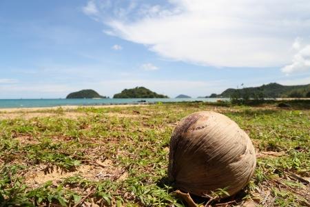 Coconut on The Beach under Sunshine photo