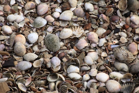 land shell: Many Kind of Shells on The Ground