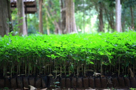 Group of Young Tree Stock Photo
