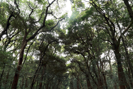 Many tall trees in the forest.