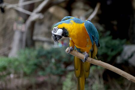The macaw bird on the branch.
