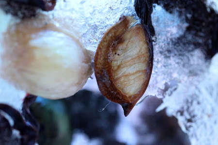 The abstract picture of dried flowers and leafs were frozen in the ice. Stock fotó