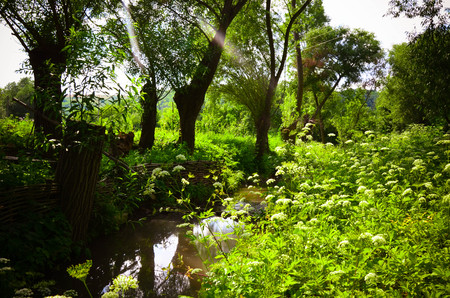 river banks: Small Clean River and Green Overgrown River Banks Stock Photo