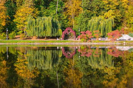 field maple: Autumn foliage, maple tree branches against lake and sky. Sunny day in Feofania park, Kyiv, Ukraine