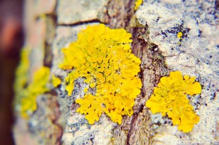 Yellow moss on the tree in winte Reklamní fotografie