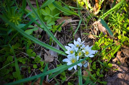 Frühling Hintergrund - Schöne Weiße Blüten Im Grünen Gras ...