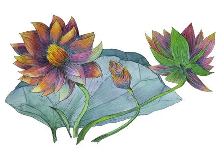 Peinture aquarelle originale de plantes aquatiques de lotus Banque d'images - 87489341