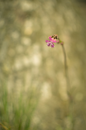 The grass and pink flower