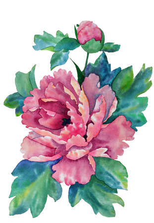 Pink peony flower in watercolor Stockfoto - 98853660