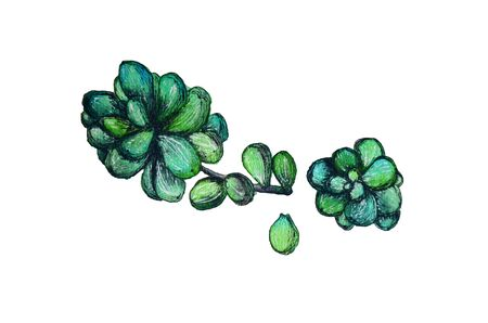 Watercolor succulent illustration with green leaves