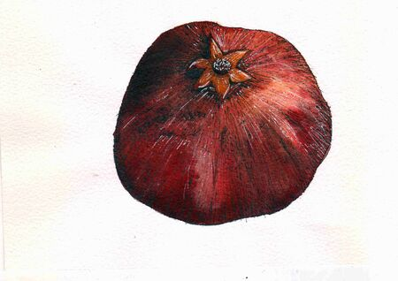 Watercolor red fresh pomegranate artwork. hand drawn fruit illustration. Isolated on white background