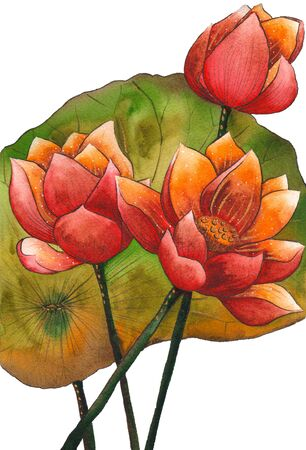 Watercolor painting illustration of blossom red lotus. Artistic floral abstract background