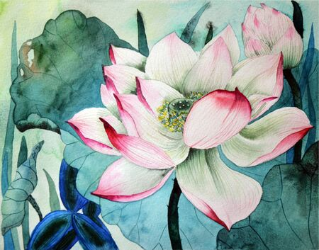 Lotus flower and seed pod. Watercolor illustration on white background