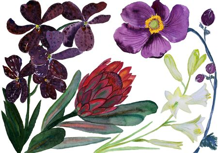 Bouquet of beautiful flowers, watercolor illustration. Tropical flowers: anemones, protea and lilia