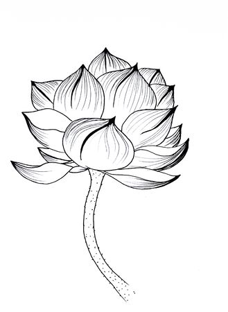 Original art, watercolor painting of lotus, Asian style painting Фото со стока