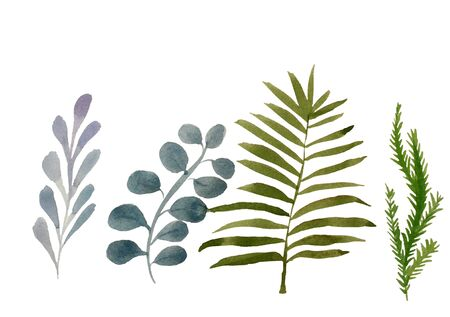 Four tropical leaves. Hand drawn leaves illustration in watercolor Фото со стока
