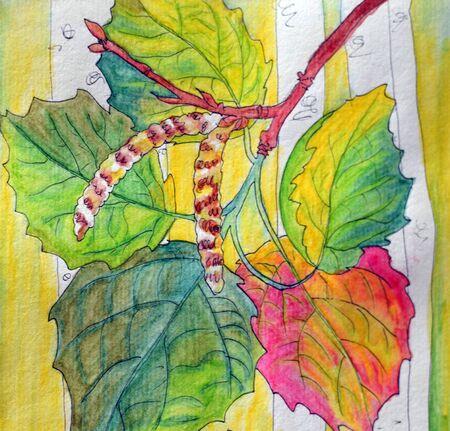 Watercolor drawing branch of birch tree, hand drawn illustration Фото со стока