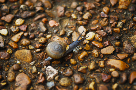 Little Snail