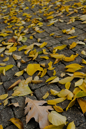 Fall Leaves on Cobblestone