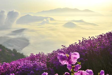mountain jeonnam korea