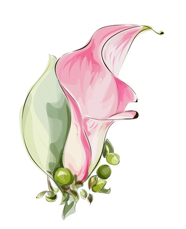 lily buds: Pink Calla. Imitation watercolor. Vector illustration.
