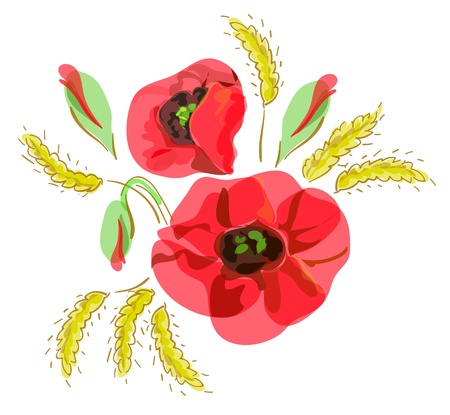 Summer bouquet with red  poppies and ears. Vector