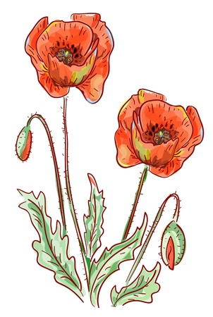 Red Poppy. Vector