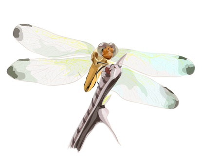 Dragon-fly on a dry branch of barbed  Watercolor imitation   Vector