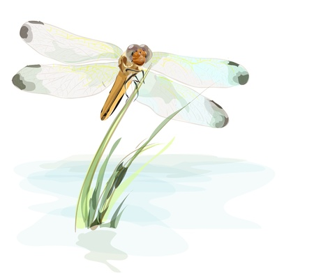 Dragonfly on a pond  Watercolor imitation Vector