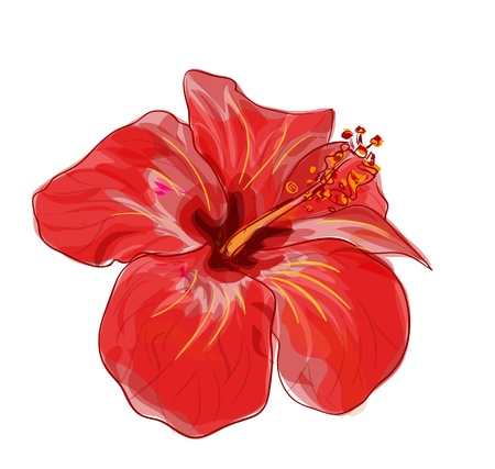 Red hibiscus flower. Vector image. Çizim