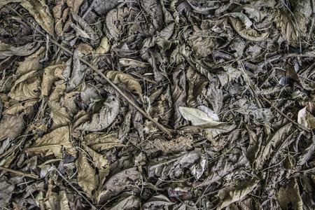 dry leaf: dry leaf litter