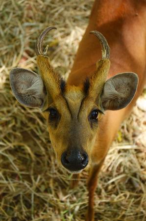 missouri wildlife: deer