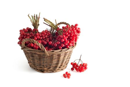 basket with a viburnum on a white background