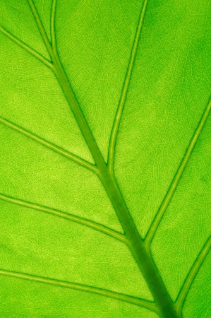 texture of a green leaf photo