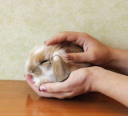 cute lop eared baby rabbit Stock Photo - 17429205