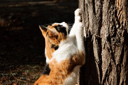 cat scratching nails on tree in garden