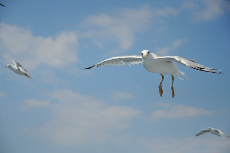 seagull flying over the ocean Stock Photo