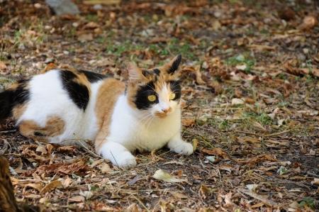 cat lying in the garden