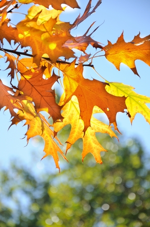 autumn leaves blue sky in background Stock Photo