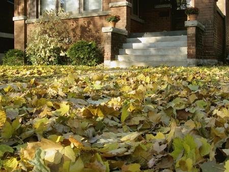 Niski poziomu widok z przodu z domu Z Fallen Leaves Zdjęcie Seryjne