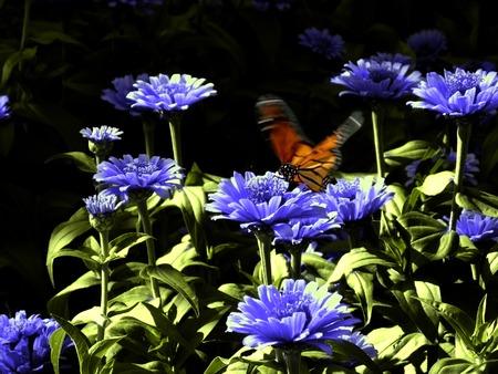 Monarch Butterfly w Dziedzinie Blue Flowers