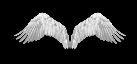 feather white: Ali d'angelo isolato su sfondo nero Archivio Fotografico