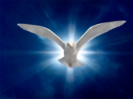 Holy Spirit Bird on Royal Blue Starburst Background Stock Photo