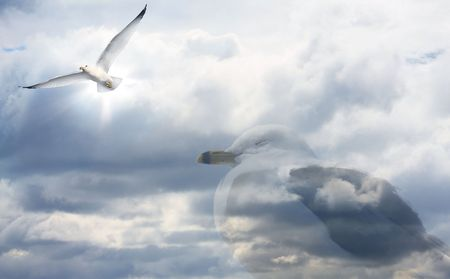 ÅšpiÄ…ca seagull dreams of flying Zdjęcie Seryjne
