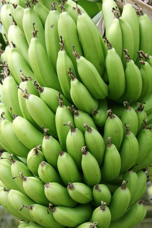 Large bunch of green bananas on the tree Stock Photo