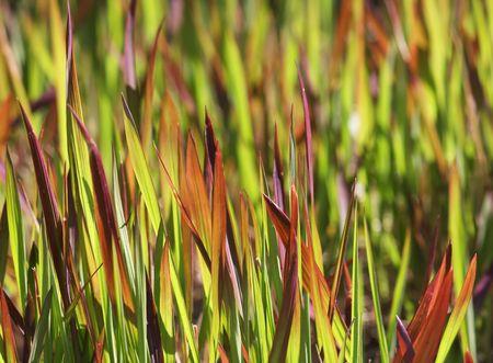 Widok Closeup kolorowe trawy w sunshine